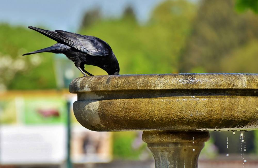 Which Type Of Water Feature?  The Pros and Cons